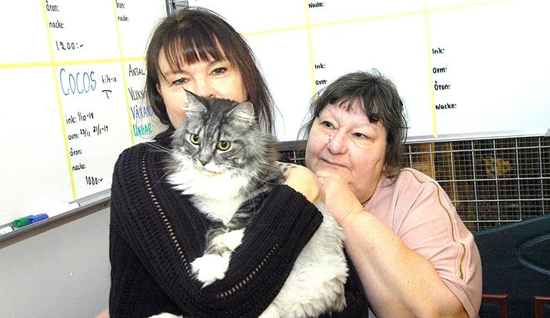 Artister från när och fjärran gör  en kattgala för Lilla Holje Djurhem